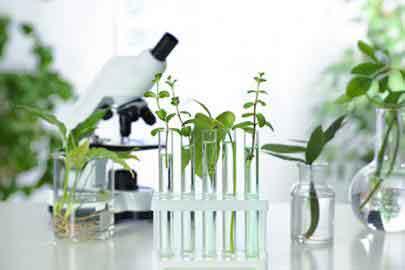 L'intérêt des produits naturels face au COVID-19